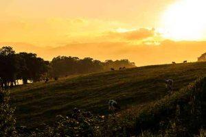 夕焼けと牧場